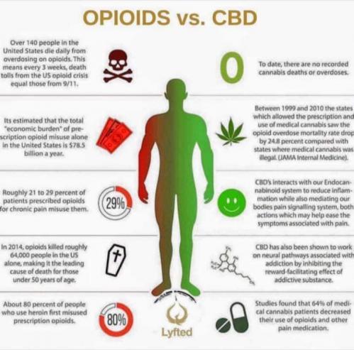 Cbd vs opioide