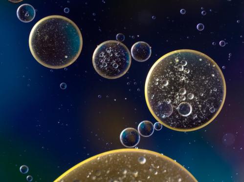 Cellules souches de raisin
