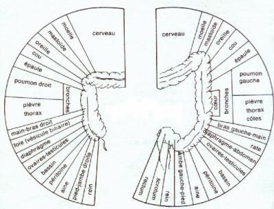 Colon langage 1