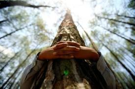 Enlacer 1 arbre