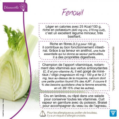 Fenouil 1
