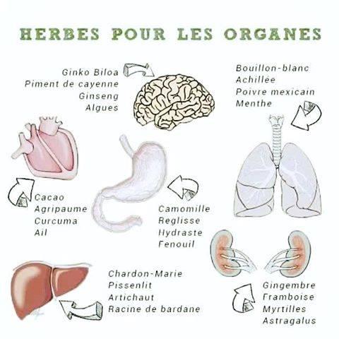 Herbes organes