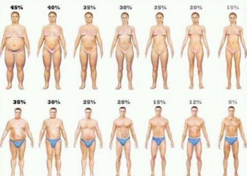 Masse graisseuse