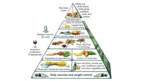 Pyramide alimentaire vivante