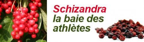 Schizandra 1