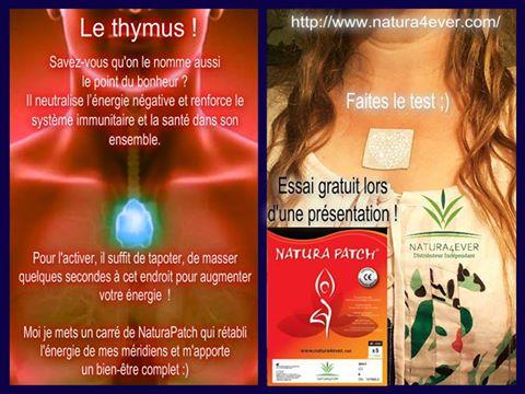Thymus 1