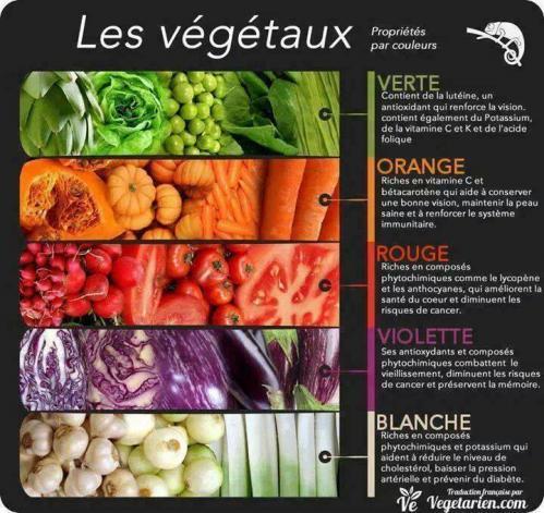 Vegetaux